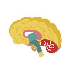 Human brain isolated icon vector