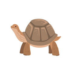 large turtle tortoise reptile animal vector image