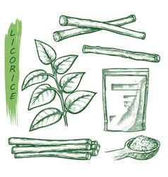 Licorice spice liquorice root seasonings sketch vector