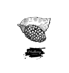 Mulberry superfood drawing Isolated hand vector image