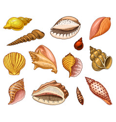 Seashells or mollusca different forms sea vector
