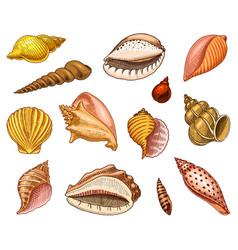 seashells or mollusca different forms sea vector image