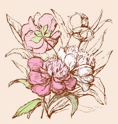 Sketch a bouquet peonies vector