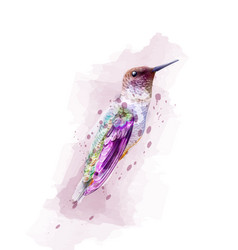 tropic colorful bird watercolor isolated vector image