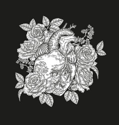 Hand drawn human heart with roses on black vector