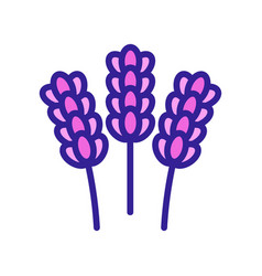 Lavender flower icon isolated contour vector