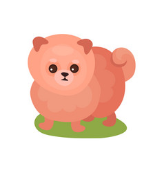 Pomeranian spitz dog purebred pet animal standing vector