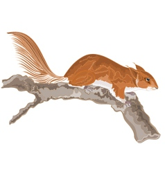 Squirrel-on-an-old-tree vector