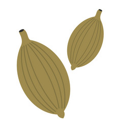 Green cardamom pods icon isolated vector