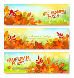 set banner template with autumn colorful vector image