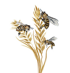 beautiful with detailed bee and wild wheat plant vector image