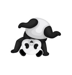 Funny panda standing upside down cute black and vector