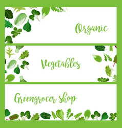 Organic horizontal banners with salad leaves vector