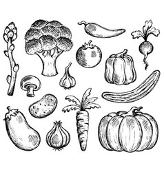 vegetable theme collection 2 vector image