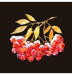 Branch of ashberry vector
