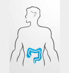 Intestines and human body vector image