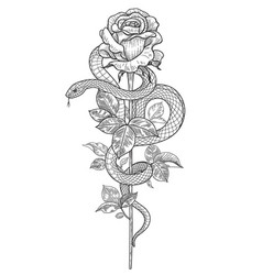 Twisted snake and rose flower vector
