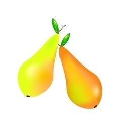 Two yellow orange pears vector image