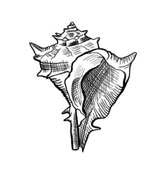 angular murex conch hand drawn ink pen sketch vector image