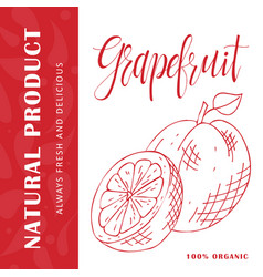 fruit element of grapefruit hand drawn vector image