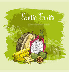 Poster of exotic fruits durian or carambola vector