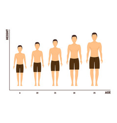 height and age measurement of growth from boy to vector image