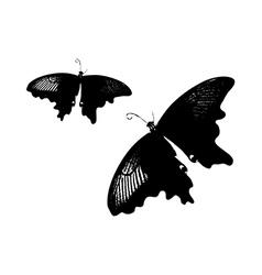 A pair of black butterflies vector