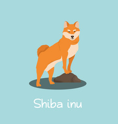 an depicting shiba inu dog cartoon vector image