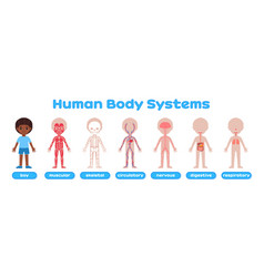 Cute afro black boy and cartoon human body system vector