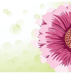 Gerbera daisy vector