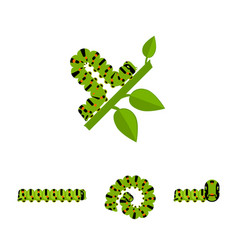 green caterpillars collection vector image