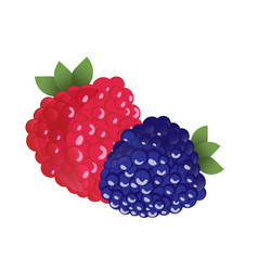 Ripe raspberries and blackberries vector