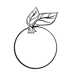 line drawing of orange with leave -simple line vector image vector image