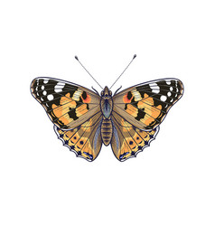 Colorful vanessa cardui butterfly isolated on vector