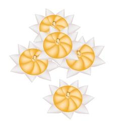 Diamond Crown or Rice Flour Dumplings vector image