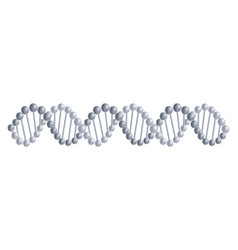dna molecules structure vector image