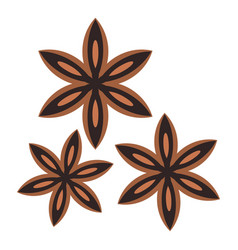 Star anise spice icon isolated vector