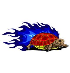 Sulcata land tortoise vector