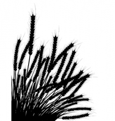 Wheat and grass vector