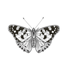 Butterfly isolated on blank background vector