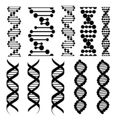 genetic code twisted dna molecules vector image
