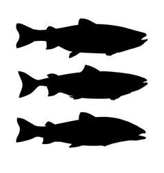 Set salmon fish vector
