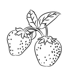 line drawing of strawberry -simple line vector image vector image