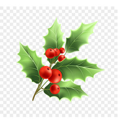 Christmas holly twig realistic vector