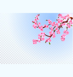 Sakura branches with pink flowers leaves and vector