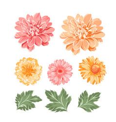 set chrysanthemum flowers elements vector image