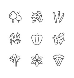 set line icons of seasoning vector image