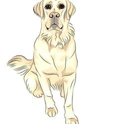 Sketch dog breed white labrador retrievers vector