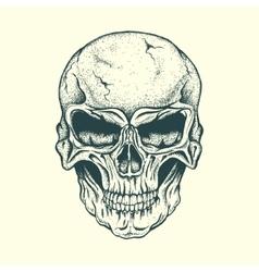 Skull human vector