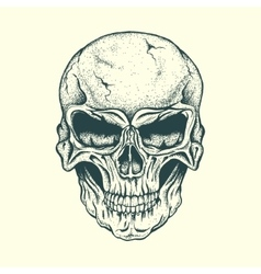 Skull of human vector image
